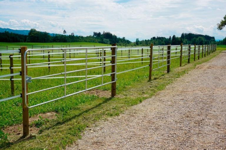 Viehzucht & Weide